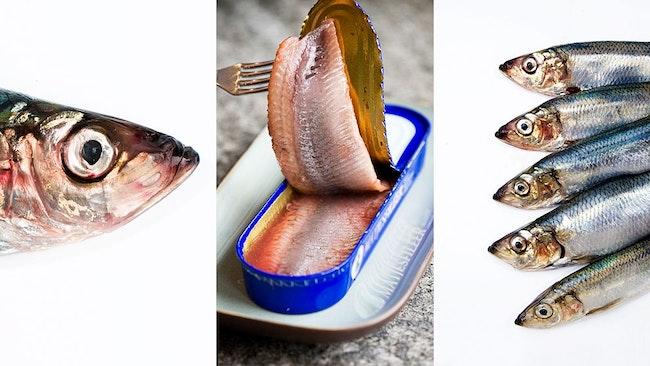 Fisk som fisk? Nej så klart inte - inte ens sill och strömming som är så lika är helt identiska, visar ny svensk forskning.