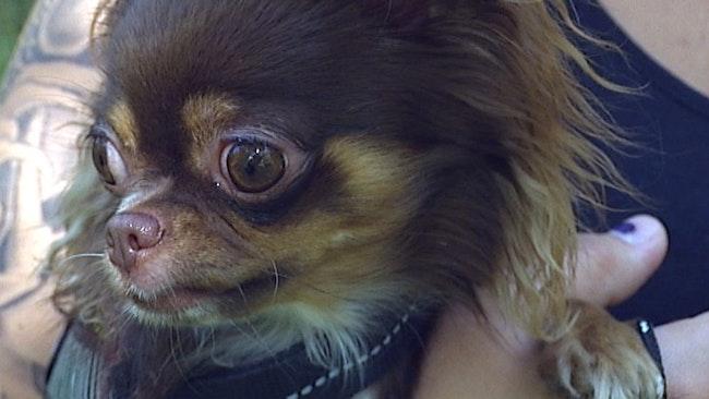 ID–hunden L:en söker rätt på försvunna husdjur.