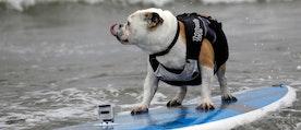 En deltagare vid surftävlingen i Kalifornien ett tidigare år. Arkivbild.