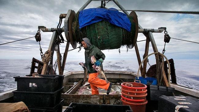 Man på båt fiskar torsk.