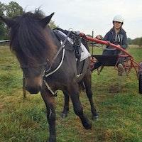 Häst med Freja