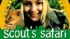 Scouts safari