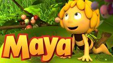Biet Maya