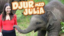 Djur med Julia
