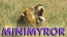 Minimyror