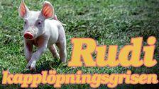 Rudi kapplöpningsgrisen