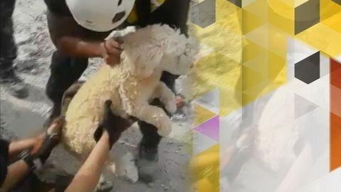 Här räddas hunden efter jordbävningen