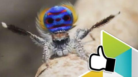 Nya spindelarter upptäckta!