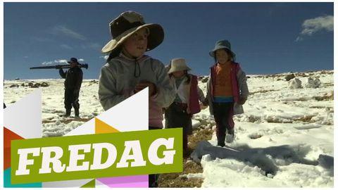Peruanska barn leker i snön.