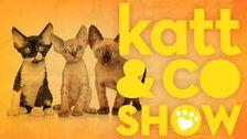 Katt & Company Show
