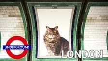 Kattbilder istället för reklam på stan