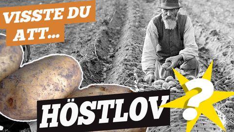 Visste du att höstlovet förut hette potatislov?