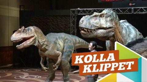 """Två stora dinosaurier, logga med texten """"kolla klippet"""""""