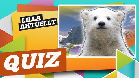 Veckans quiz, vecka 7. Bild på liten isbjörn.