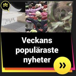 Veckans populäraste nyheter