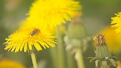 Blomsterspråk