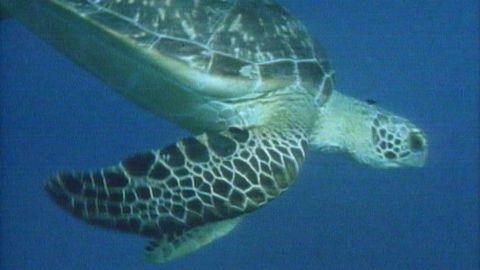 Avsnitt 13 av 13: Sköldpaddejakt