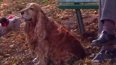 Avsnitt 13 av 15: Eivor och lilla bruna hunden