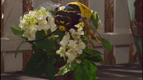 Avsnitt 7 av 10: Getingar och bin
