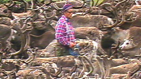 Tjernobylolyckan - Tvätt av renkött