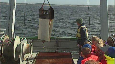 Havsforskarna