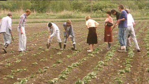 Fläskfarmen