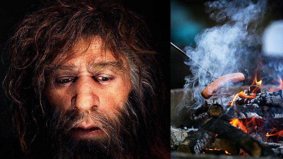 När våra förfäder började laga mat över eld så hände något med utvekcklingen av våra hjärnor.