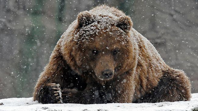 Karhu Nukkuu