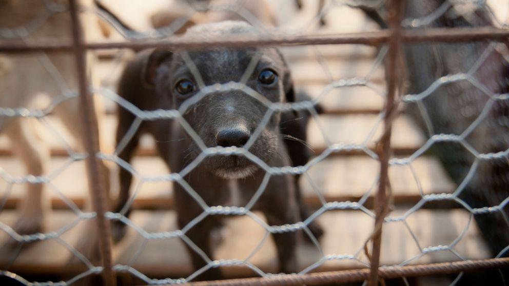Misstankt rabies hos hund i sverige