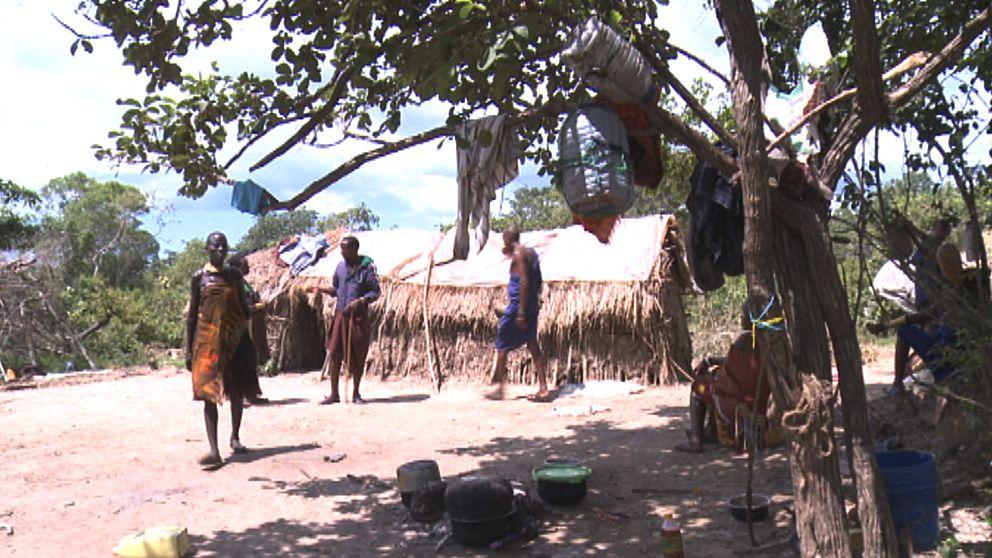 Uppdrag granskning har träffat några av nomadfamiljerna i Tanzania som i dag har betesmarker där det planeras bli sockerrörsodling.