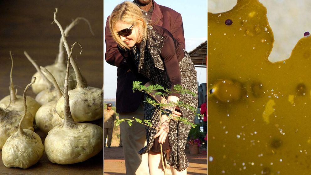 Macarot, moringaträd och kelp