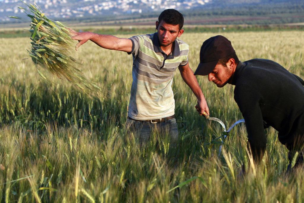 Vaxande israelisk kritik mot grass