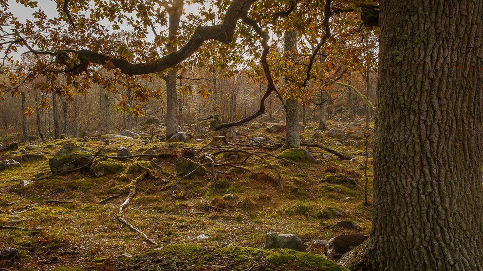 Sturefors eklandskap, Östergötlands WWF-pärla
