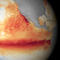 Ytvattentemperaturavvikelse från normalt över Stilla havet. Varmare (rött/orange) och kallare (blått).