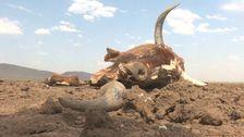 El Nino anges somen av orskarena till utbredd torka i östra Afrika