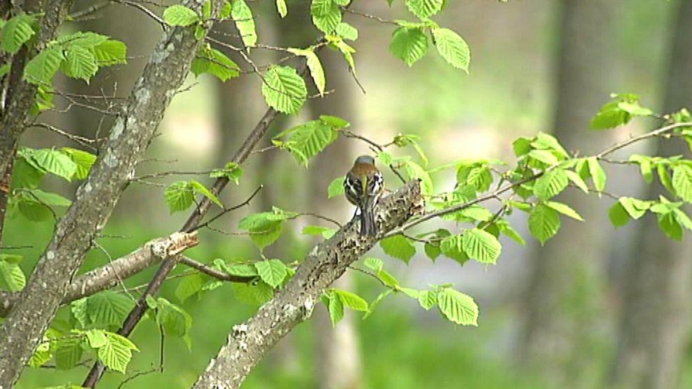 Fågel på kvist