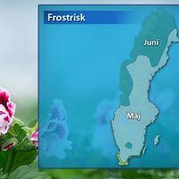 Frosten biter en bra bit in i både maj och juni.