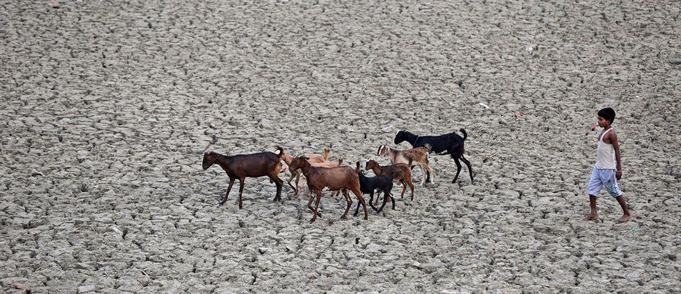 Sprucken jord och barn med djur.