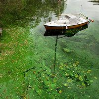 Minskad konsumtion av protein kan minska problemen med algblomning i Östersjön
