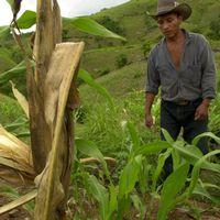 Torkan i centralamerika har drabbat flera miljoner människor.