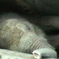 En elefant fastnade i en brunn på södra Sri Lanka