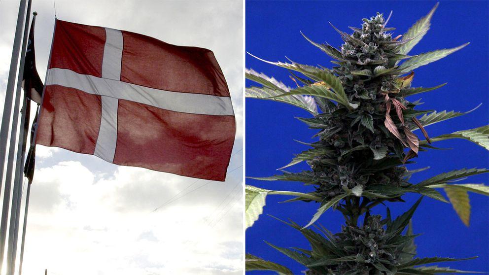 Bilden är en diptyk av en danskflagga och en cannabisknopp.