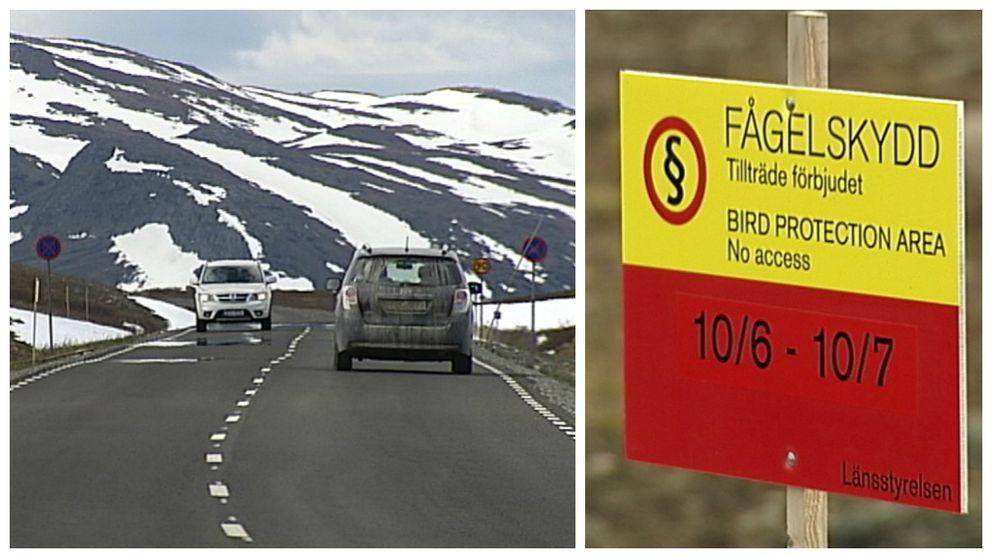 Området söder om Stekenjokk har under en längre tid haft problem med äggtjuvar och boplundrare. Just nu är det förbjudet att vistas utanför vägen.