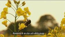 SVT Nyheter Halland