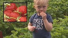 Jordgubbar barn jordgubbsland