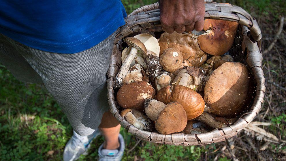 Svampplockare med korg fylld med svamp