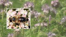 Bi och honungsört