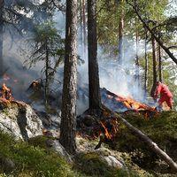 skogsbrand i voxna