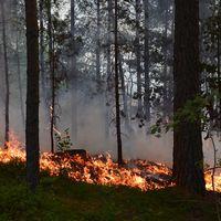 Brand i Vrinneviskogen