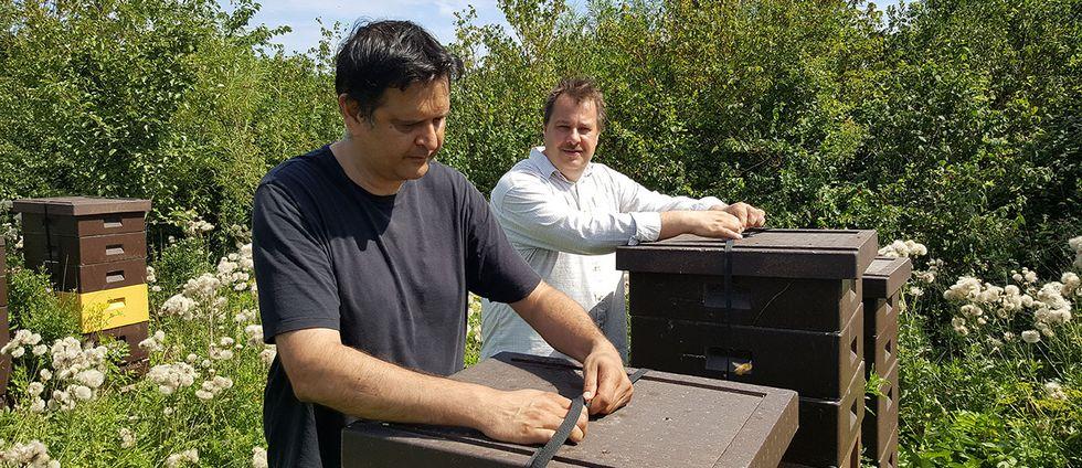 Patrick Hansson och Mats Khakhar driver en biodling utanför Lund.